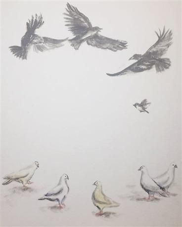 地上白鴿非全白