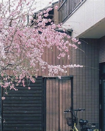 在咖啡屋遇见你时正值樱花盛开