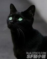 白尾巴的黑猫
