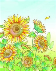 向日葵的思念