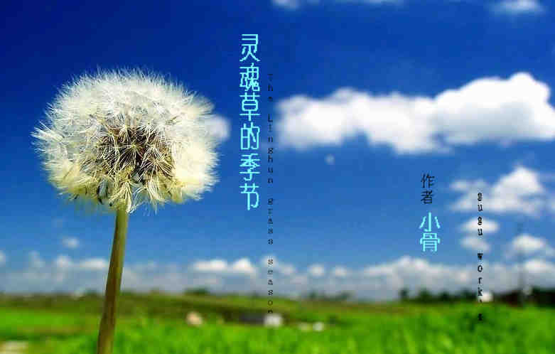 灵魂草的季节 The Linghun grass season