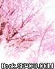 《樱花簌》