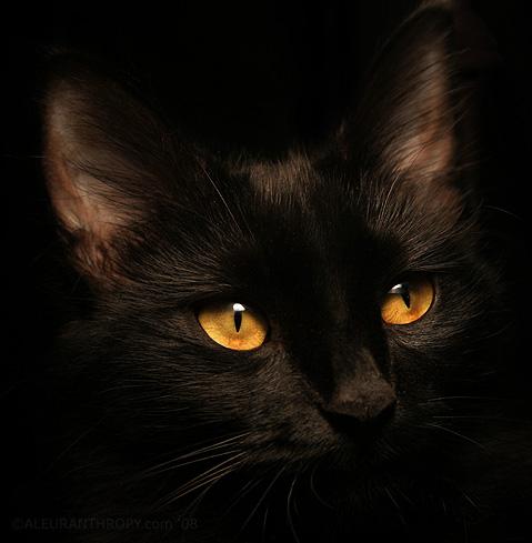 可爱黑猫qq头像